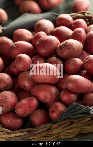 Raw Organic Red Potatoes Ready for Cooking - Stock Photo