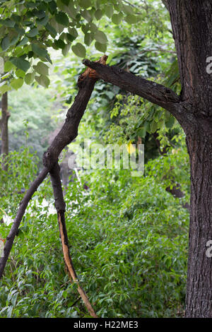 Broken branch after storm - Stock Photo
