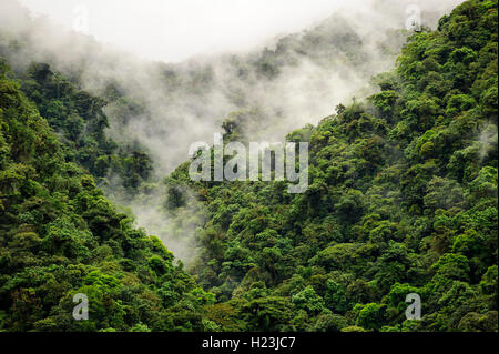 Thick rainforest, mist, cloud forest, Braulio Carrillo National Park, Costa Rica - Stock Photo