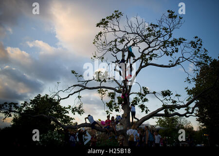 Barcelona, Catalonia, Spain. 24th Sep, 2016. Children enjoy climbing a tree at Ciutadella Park of Barcelona. © Jordi Boixareu/ZUMA Wire/Alamy Live News