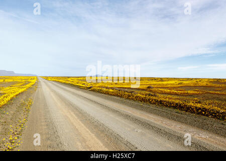 Clouds on the road leading to perfect  of The Tankwa Karoo - Stock Photo