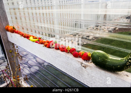 Freshly picked tomatoes, strawberries, peppers & cucumbers; vegetable garden - Stock Photo