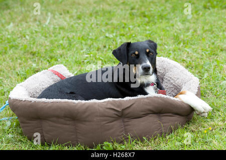 Dog relaxing outside in a dog bed - Stock Photo