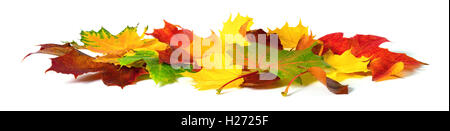 Fallen down autumn leaves in vivid colors, studio isolated on white background - Stock Photo
