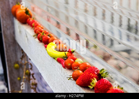 Freshly picked tomatoes, strawberries, & peppers; vegetable garden - Stock Photo