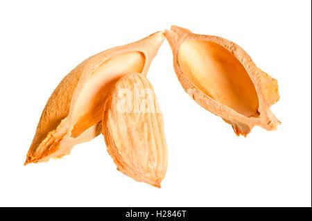 chopped apricot and walnut on white background - Stock Photo