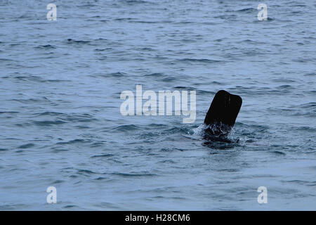 Diving flipper in a water (scubadiver) - Stock Photo