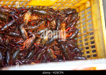 New Delhi, India - October 10, 2015: Crawfish are for sale in a local India market - Stock Photo
