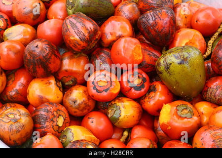 Japanese persimmon are for sale in a local India market - Stock Photo