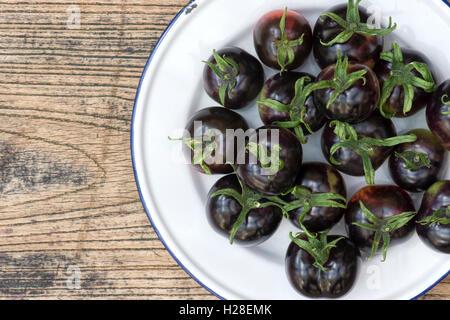 Solanum lycopersicum. Picked Black Tomatoes Indigo Rose on an enamel plate - Stock Photo