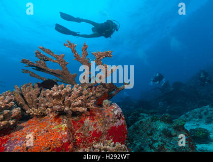 Group of scuba divers exploring sea bottom. Underwater life with beautiful rocks and coral - Stock Photo