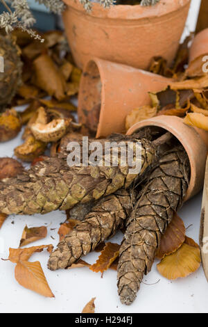 Conifer cones and flowerpots - Stock Photo