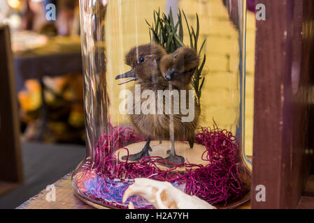 two headed duck chick - Stock Photo