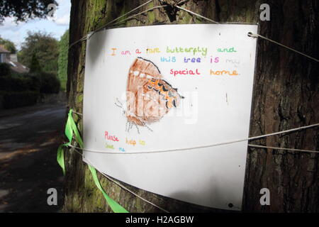 A poster on the trunk of a mature elm tree in Nether Edge, Sheffield alerts passers-by that the tree hosts rare - Stock Photo