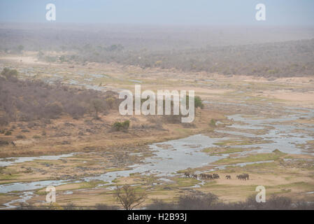 Herd of elephants crossing the Olifants River on a  windy, hazy day due to the sand been blown around - Stock Photo