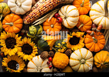 Fall background with pumpkins - Stock Photo