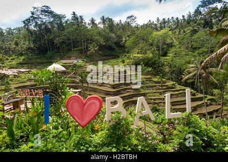 Indonesia, Bali, Tegallang, I love (heart) Bali sign in cafe garden opposite rice terraces - Stock Photo