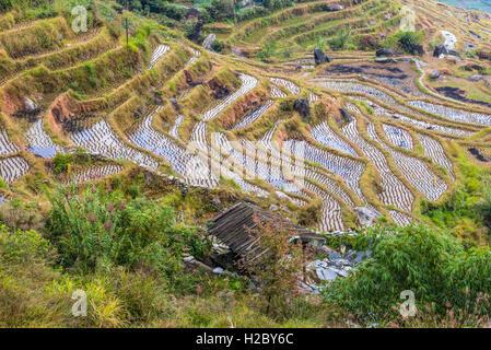 Longsheng terraced rice fields in cloudy weather, Guilin, Guangxi, China - Stock Photo