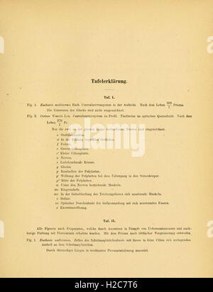 Abhandlungen der Senckenbergischen Naturforschenden Gesellschaft - Stock Photo