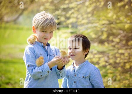 Two friends in the park, playing with cute newborn chicks, springtime - Stock Photo