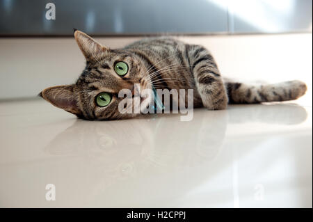 Tabby cat lying on side,looking at camera - Stock Photo