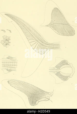 Memoirs of the Museum of Comparative Zoölogy, at Harvard College, Cambridge, Mass (1913) (1 - Stock Photo