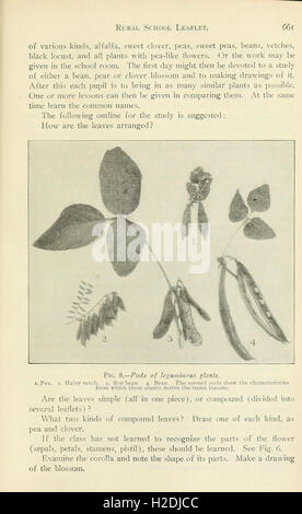 Annual report of the Cornell University Agricultural Experiment Station, Ithaca, N.Y (Page 661) - Stock Photo