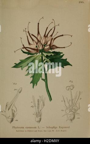Atlas der Alpenflora (Pl. 295) - Stock Photo