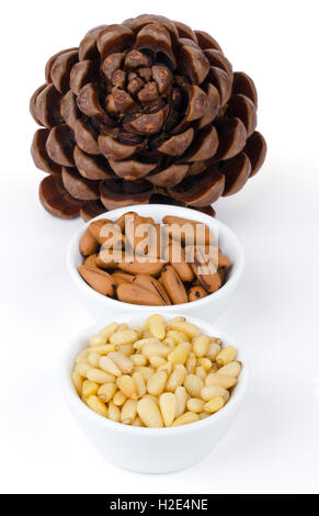 Stone pine cone with seeds and nuts over white. Geometric Pinophyta cone, seeds, nutshells and shelled nuts in white - Stock Photo