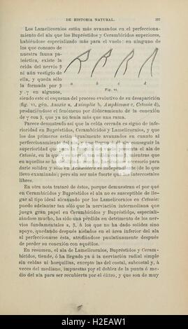 Boletín de la Sociedad Española de Historia Natural (Page 197) - Stock Photo