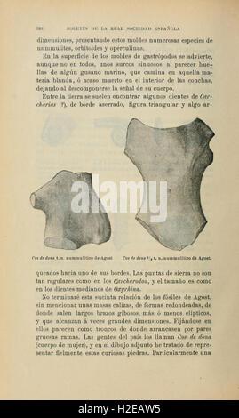 Boletín de la Sociedad Española de Historia Natural (Page 528) - Stock Photo
