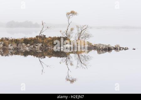Silver birch trees reflected in misty Lochan na h-Achlaise, Rannoch Moor, Scottish Highlands, Scotland - Stock Photo
