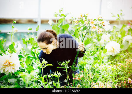 A woman working in an organic flower nursery. - Stock Photo