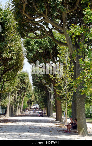 avenue of plane trees platanus on a road near soreze tarn stock photo royalty free image. Black Bedroom Furniture Sets. Home Design Ideas