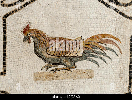 Cockerel mosaic from a 2nd century AD Roman pavement from Acholla  Tunisia now in Bardo Museum Tunis.  Xenia (hospitality) - Stock Photo