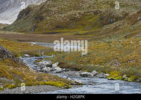 Stream & valley near Coal Harbour, South Georgia January - Stock Photo