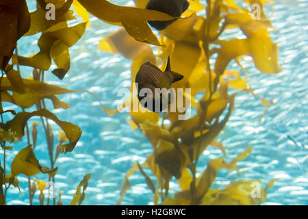 Monterey bay Aquarium, Monterey, California - Stock Photo
