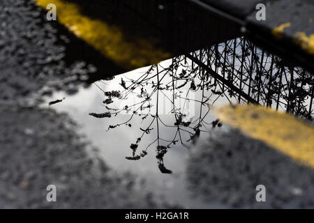Street images from around Glasgow Scotland - Stock Photo