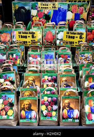 Flower market  Rembrandt  tulip bulbs on the Singel Amsterdam The Netherlands - Stock Photo