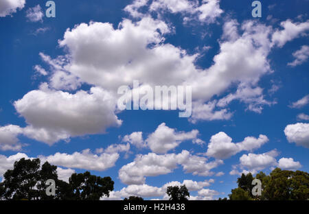 Cloudscape of white, fluffy cumulus clouds in a bright blue sky with a hint of green tree tops in Western Australia. - Stock Photo