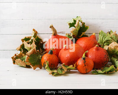 Autumn pumpkins and leaves on a white wooden background. Thanksgiving background. Halloween. - Stock Photo