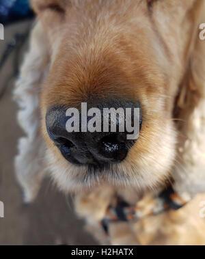 Hundenase; Riechorgan - Stock Photo