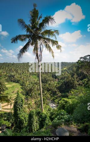 Indonesia, Bali, Ubud, Sayan, Ayung River Valley from Taman Bebek resort - Stock Photo