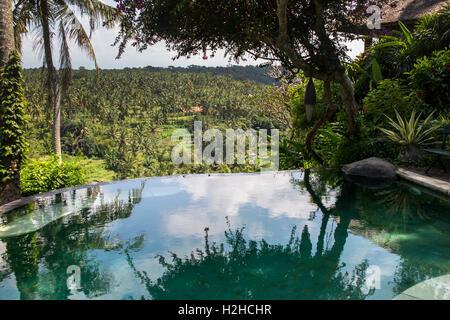 Indonesia, Bali, Ubud, Sayan, Taman Bebek resort, infinity pool above Ayung River Valley - Stock Photo