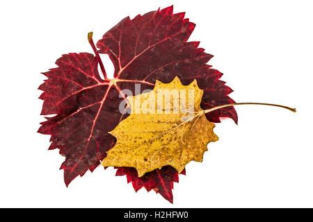 Fallen autumn leafs, isolated on white background - Stock Photo