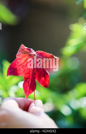 Leaf. Autumn inspiration - Stock Photo