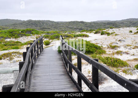 Wooden boardwalk into the limestone bluff and green dunes at White Cliff Point on the coast in Hamelin Bay,Western - Stock Photo