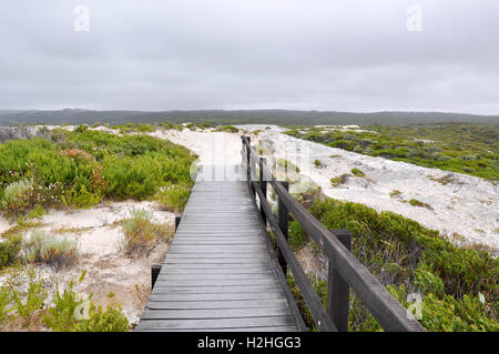 Wooden boardward to White Cliff Point with rugged limestone in the vegetated dunes on the coast in Hamelin Bay,Western - Stock Photo