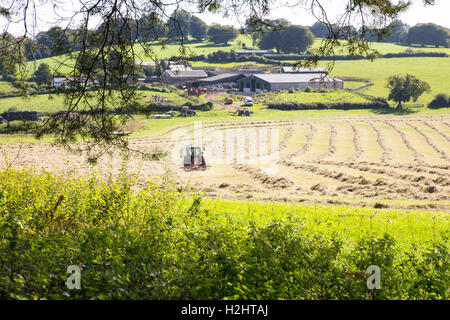 Making hay while the sun shines. - Stock Photo