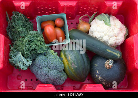 Autumn vegetables for sale at farmers market: chard, tomatoes, onions, cauliflower, cucumber, broccoli and squash - Stock Photo